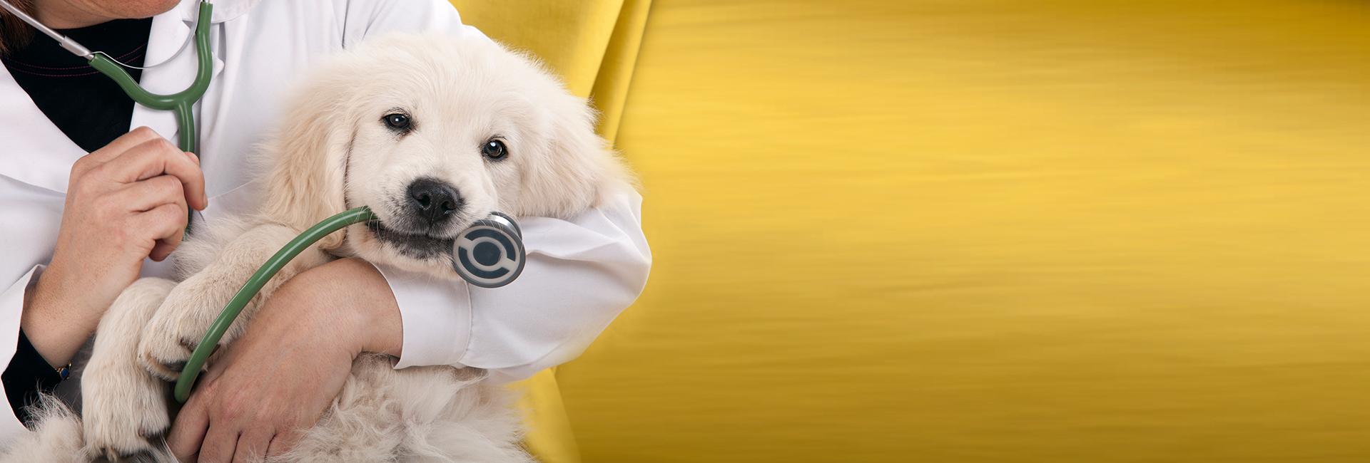 Cochrane mobile veterinary, Chestermere Mobile Veterinary
